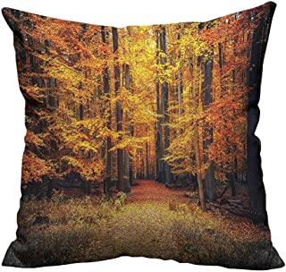 YouXianHome Print Bed Pillowcases Magical Fall Photo in National Park with Vivid Leaf Plant Eco Earth Washable and Hypoallergenic(Double-Sided Printing) 26x26 inch