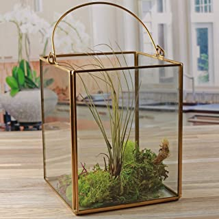 "Circleware 03512 Terraria Clear Glass Terrarium with Handle Home Plant Decor Metal Frame Design Display Flower Balcony Box and Garden Gifts 5.12"" x 6.50"" Square Gold 5.12x 6.5"