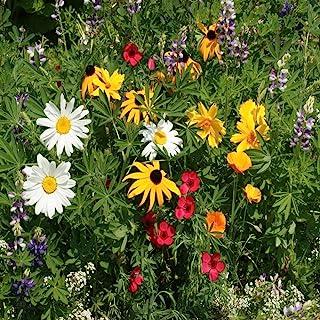 Outsidepride Northwest Wildflower Seed Mix - 1 LB