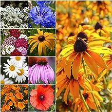 Seed Needs, Dryland Wildflower Mixture (20 Species) 30,000 Seeds Fresh & Untreated