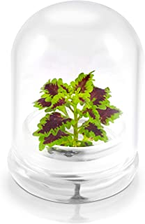 "Rainbow Floral Terrarium - Self Grow, Maintenance Free -Coleus - 4"" Dome"
