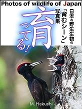 育ってる!: 日本の野生生物の「育むシーン」写真集 日本の野生生物写真集