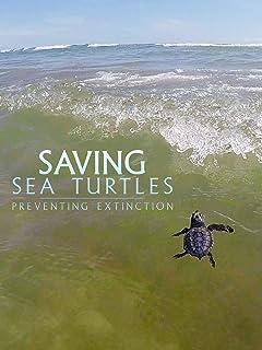 Saving Sea Turtles: Preventing Extinction