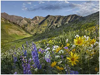 Global Gallery Art on a Budget DP-396499-1824 Tim Fitzharris Larkspur and Sunflowers Albion Basin Wasatch Range Utah Unframed Giclee on Paper Print, 18