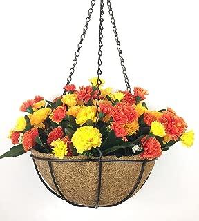 Best dianthus hanging basket Reviews