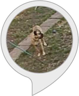 free mp3 dog barking