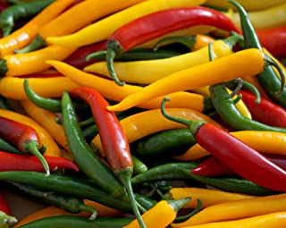 Hot Chili Pfeffer Cayenne Mischung - Pepper - 20 Samen