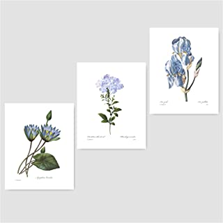 (Set of 3) Botanical Prints (Blue Wall Art, Redoute Flower Home, Cottage Decor) Lily, Plumbago, Iris – 8x10 Unframed