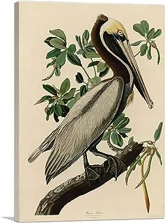ARTCANVAS Brown Pelican Canvas Art Print by John James Audubon - 18