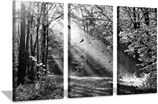 Hardy Gallery Forest Artwork Landscape Wall Art: Sunlight & Shadow Picture Print on Canvas for Living Rooms Office (16