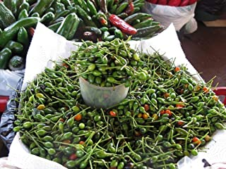 Chile Pequin Peppers - Tiny brilliantly red chile peppers - they pack a punch!! (100 - Seeds)