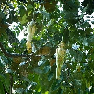 Home Decor Plants Flowers Seeds 10Pcs Rare Female Shape Ginseng Fruit Pepino Seeds Garden Outdoors Tree Plant
