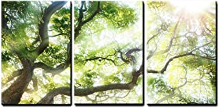 wall26 - Big Tree with Sun Light - Canvas Art Wall Decor - 24