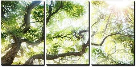 wall26 - Big Tree with Sun Light - Canvas Art Wall Decor - 16