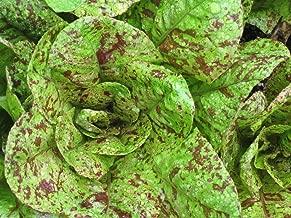 Organic Romaine Lettuce Flashy Trout Back 230+ Seeds Non-GMO