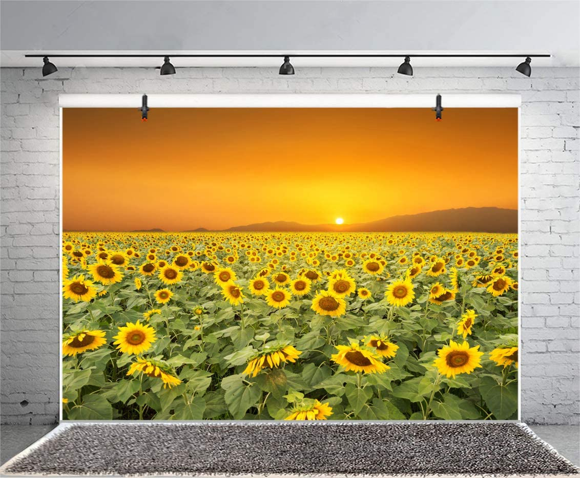 DORCEV 8x6ft Sunflower Backdrop Autumn Harvest Party Birthday Party Wedding Ceremony Party Background Sunset Sunflowers Garden Room Wallpaper Kids Adult Photo Studio Props