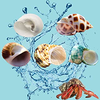 PPCLION Natural Hermit Crab Shells Pearl White Turbo Seashell for D/écor,Size 3 Opening 1.5
