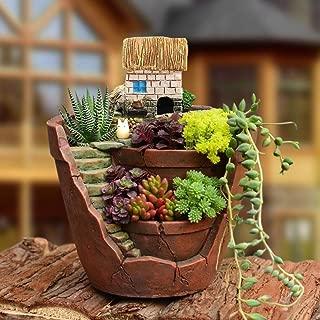 buddha hand plant for sale
