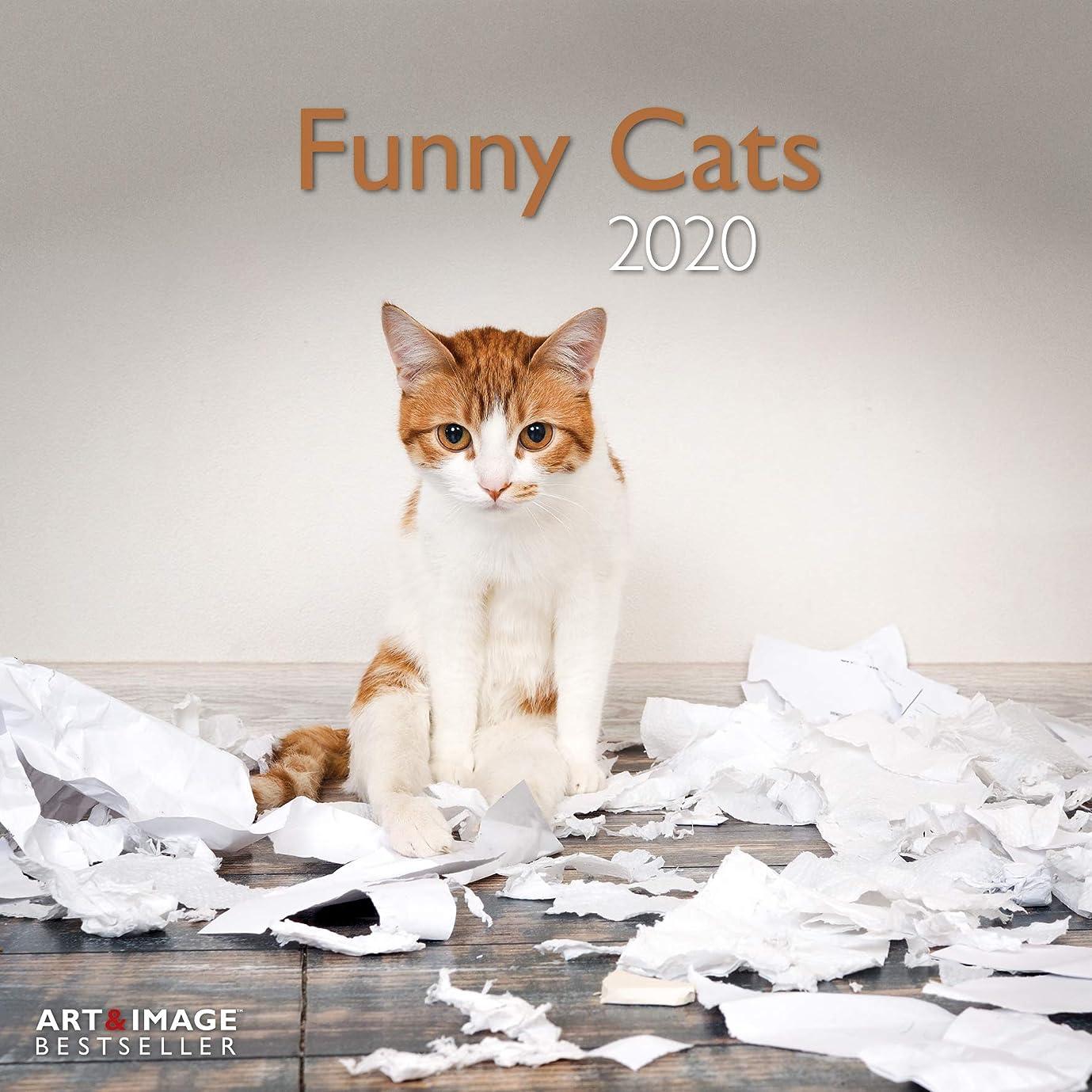 省略ドライバ邪魔するFunny Cats 2020 Broschuerenkalender