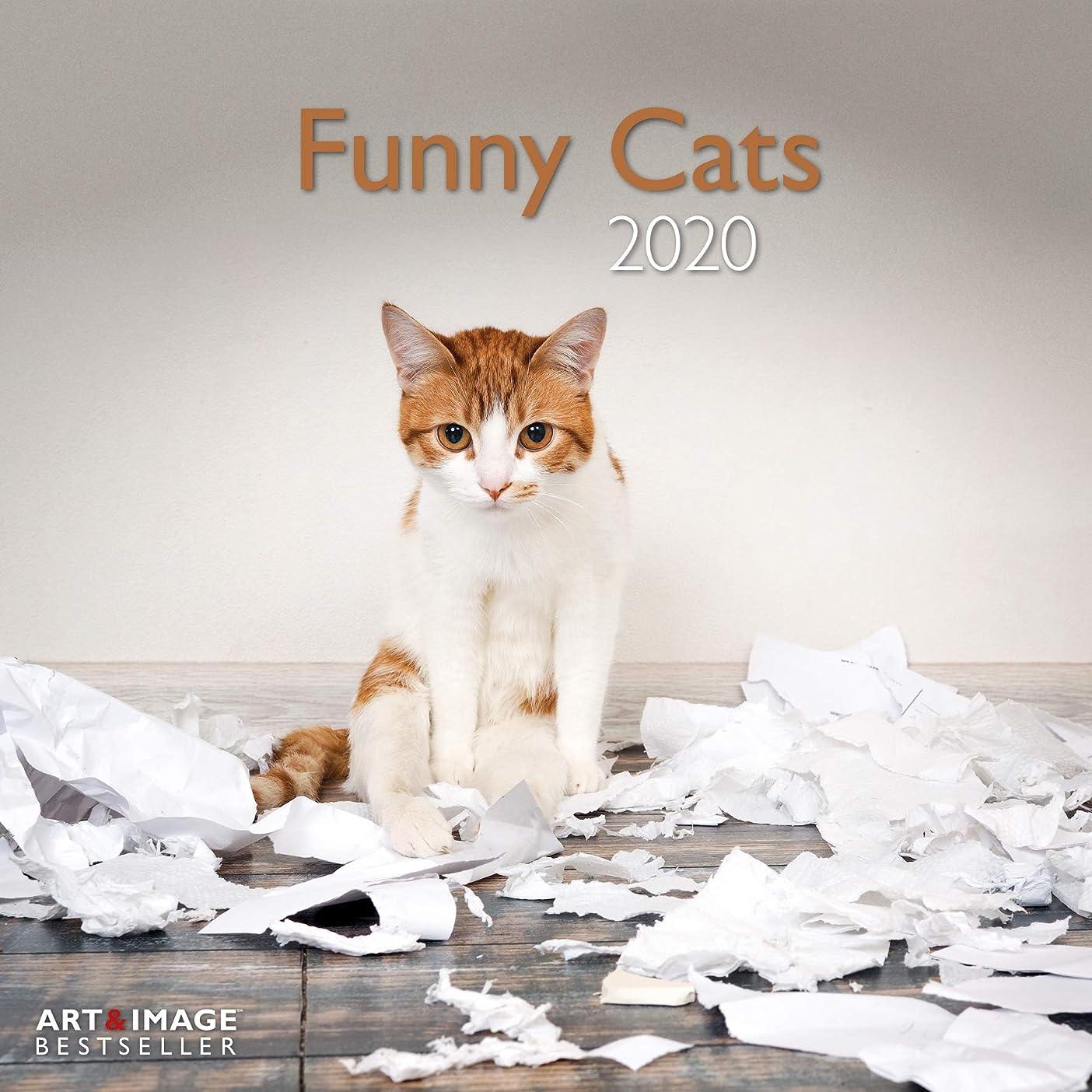 行為潜在的な六分儀Funny Cats 2020 Broschuerenkalender
