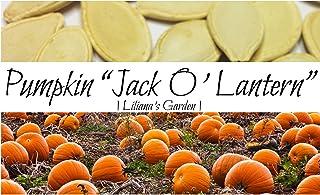Pumpkin Seeds - Jack O'Lantern - Heirloom - The Original Carving Pumpkin - Liliana's Garden