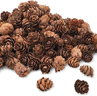 CEWOR 210pcs Pine Cones for Crafts 1inch Mini Natural Pinecones Fall Decorations for Home Thanksgiving Christmas Ornaments