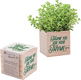Desk Accessory for The Office - Thyme Plant Seed Packet, Peat Pellet, and Natural Pine Wooden 3x3 inch Cube Planter - Employee Appreciation Gift -
