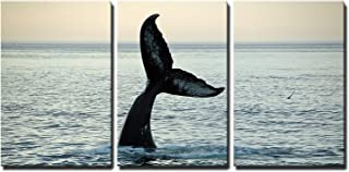 wall26 - 3 Piece Canvas Wall Art - Fin of a Humpback Whale - Modern Home Decor Stretched and Framed Ready to Hang - 24