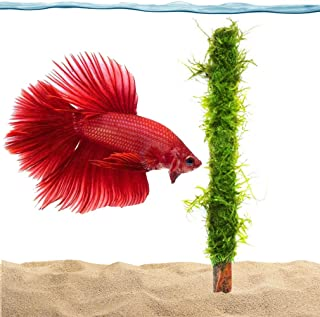 Luffy Moss Bamboo Stick, 7-inches, All-Natural, Beautiful Aquatic Decor Safe for Freshwater Fish Tanks, Fun and Playful Aquarium Toy for Betta, Tetra, Gourami and Shrimp