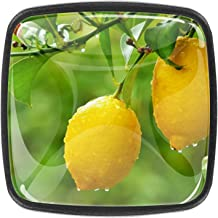 Keukenkast knoppen - gele citroenen opknoping op boom - knoppen voor dressoir laden voor kast, kast, badkamer of kantoor -...