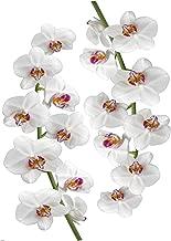 Plage 15278448x 68cm Orchid Decorative Wall Stickers Art Vinyl Wall Mural–68x 0.1x 18