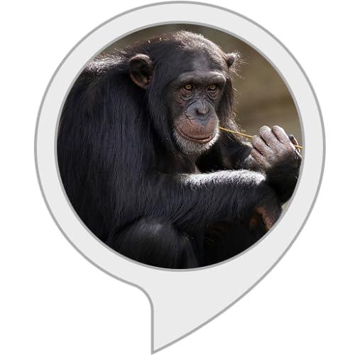 Geräusch von Affen