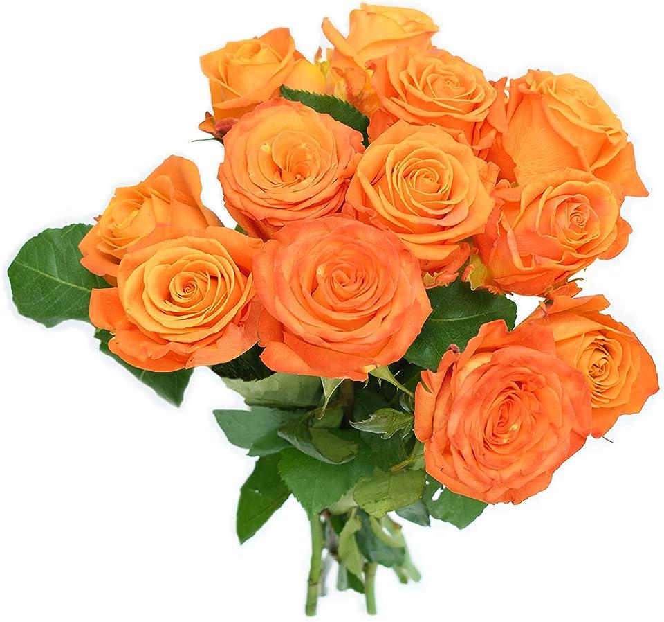 Greenchoice Flowers - Orange Roses, Fresh Cut Flowers, Roses for Delivery, Fresh Roses, Long Stem Roses (12 Stems)