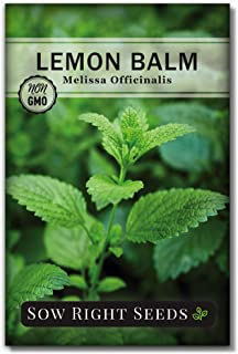 Sow Right Seeds - Lemon Balm Seeds Non-GMO Heirloom Seeds with Full Instructions for Planting an Easy to Grow herb Garden,...