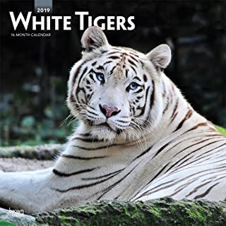 White Tigers 2019 12 x 12 Inch Monthly Square Wall Calendar, Wildlife Zoo Animals (Multilingual Edition)