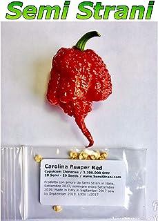 seedsown Keimfutter: 20 Reine Samen Carolina Reaper Weltheißeste Chili Pepper 2,2 Mil SHU Prod. 2017