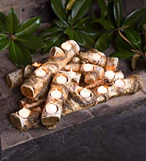 Plow & Hearth Large Log Fireplace Candle Holder - Birch 20.5''L x 14''W x 7.5''H with 15 Holes - Birch