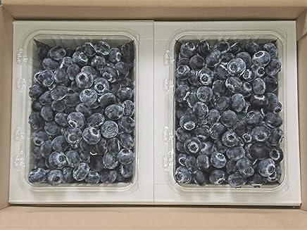 TEN×MINAMOTO 冷凍ブルーベリー Mサイズ以上 約800g