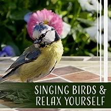 Best your bird oasis Reviews