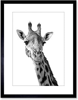 The Art Stop Photo Black White Giraffe Portrait FACE Framed Print F97X2824