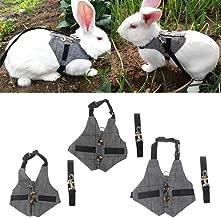 Amazon.es: correa conejo