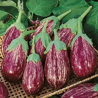 shooting star eggplant