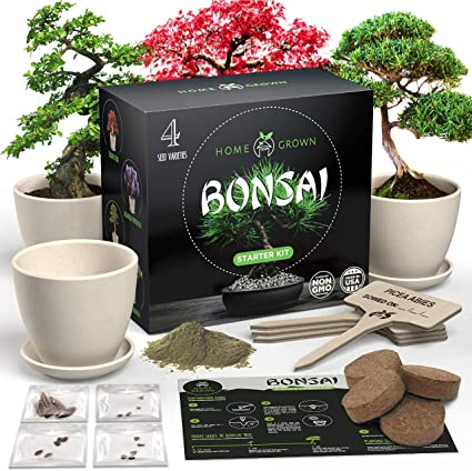 Amazon Com Home Grown Bonsai Tree Kit Bonsai Tree Starter Kit With 4 Seeds Types Incl Purple Bonsai Tree Indoor Growing Plant Gifts For Moms Who Have Everything Seed Starter Kit For