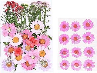 قطعتان من أزهار طبيعية مجففة متعددة من الزهور الحقيقية المضغوطة متنوعة الألوان من أجل صناعة يدوية من الراتنج لتزيين الأظاف...