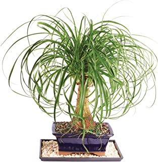 7 year old palm tree
