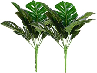 Best monstera deliciosa baby Reviews