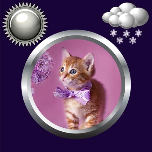 Kitty Uhr & Wetter Widget