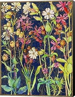 Best soapwort flowers photos Reviews