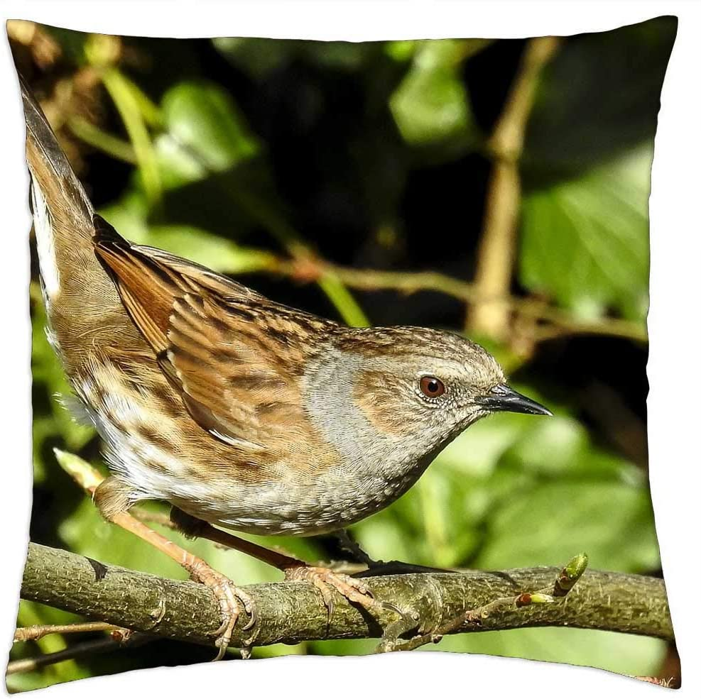 LESGAULEST Throw Direct sale of manufacturer Pillow Cover 24x24 Ga Songbird inch Max 86% OFF Dunnock -