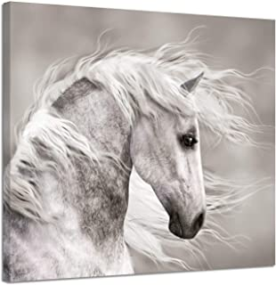 Best black and white horse pictures Reviews